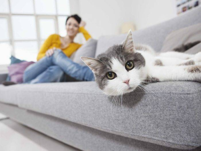 Germany, Bavaria, Munich, Mid adult woman with cat on couch, smiling