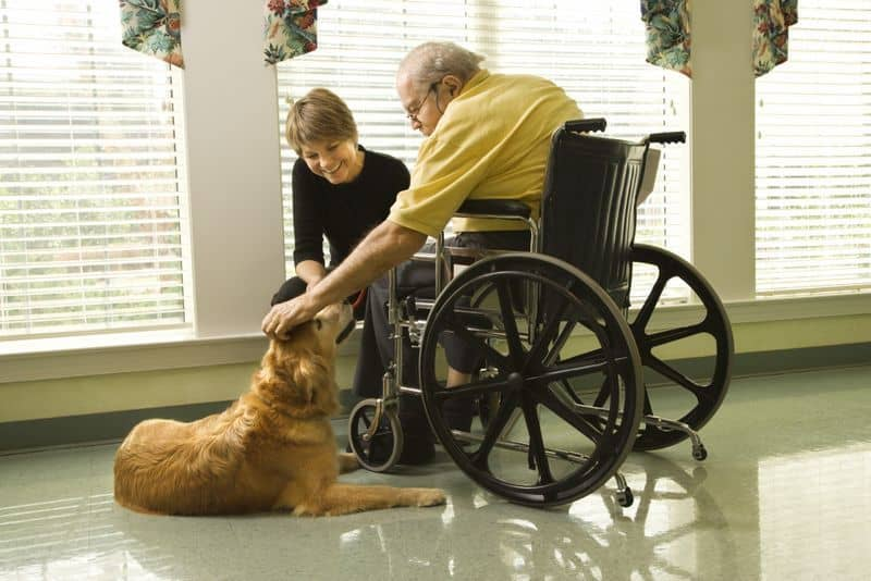 Man in wheelchair with dog.